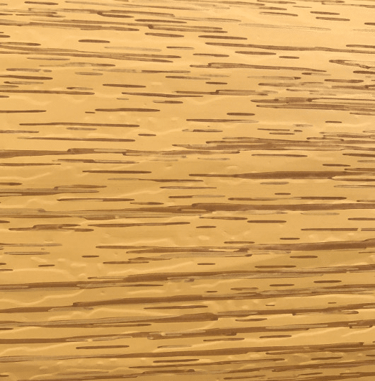 colorado pine