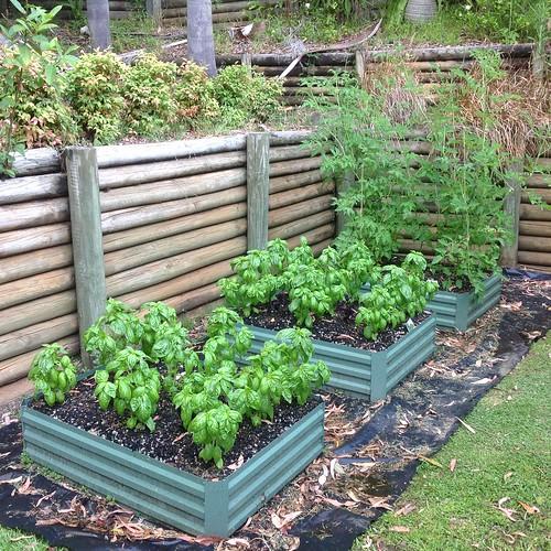 raised garden bed photo